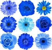 Various Blue Flowers Head — Stock Photo