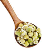 Peas sprouts over wooden spoon — Stockfoto