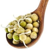エンドウ豆もやし — ストック写真