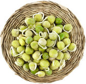 Pea seeds with sprouts close up — Stockfoto