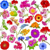 Samling uppsättning olika blommor — Stockfoto