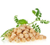 Chickpeas plant with seed heap — Stock Photo