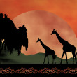 Night in Africa — Stock Photo