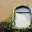 Vintage wall window green leaves. — Stock Photo
