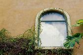 Vintage wall window green leaves. — Stockfoto