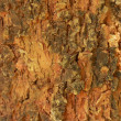 Termite on tree background — Stock Photo