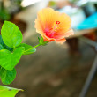 Flower orange - Hibiscus flower — Stock Photo