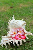 Cockleshells and pink flower — Stock Photo