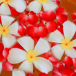 Frangipani floating. — Stock Photo