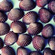 Scallop background. — Stock Photo