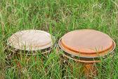 Bongo on green grass — Stock Photo