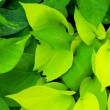 Green leaves. — Stock Photo #34131353