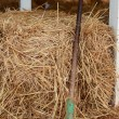 Rake in a pile of straw. — Stock Photo