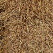 Close up of square straw. — Stock Photo
