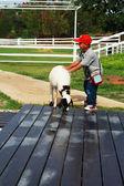 Sheep farm boys. — Stock Photo