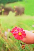 Cosmos - Children holding pink flower — Stock Photo