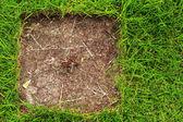 土と草の緑. — ストック写真