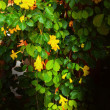 Stock Photo: Yellow flowers in the garden