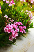 Pink flowers in the nature — Stock Photo