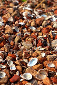 Brown stone background with shells. — Foto Stock