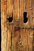 Fondo de madera vieja — Foto de Stock