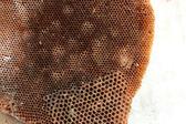 Oude bijenkorf — Stockfoto