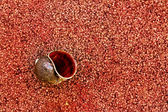 Snail shells laying on the cement floor red. — Stock Photo