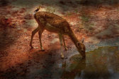 Doğada sika geyiği — Stok fotoğraf