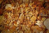 Kahverengi eski ahşap arka plan doku — Stok fotoğraf