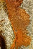 Termite nests on tree — Stock Photo