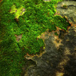 Green moss in the nature. — Stock Photo