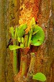 Green leaves on trees — Stok fotoğraf