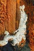 Čerstvé houby na přírodu — Stock fotografie