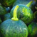 Fresh green little pumpkin in the market — Stock Photo #35572685