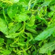 Holy basil at the market — Stock Photo
