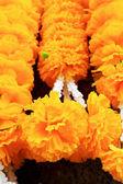 Fleur de calendula dans le marché — Photo