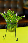 Small pink flowers in a glass jar on the table. — Stock Photo