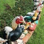 Sculptures chicken. — Stock Photo #37746357