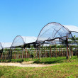 Stock Photo: Hydroponic vegetable farm landscape