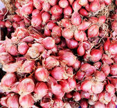 Shallot - asia red onion — 图库照片