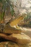 Coccodrillo nella natura — Foto Stock
