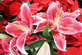 Pink lily artificial flowers — Photo