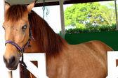 Cavalos em uma fazenda — Fotografia Stock