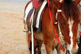 Horses on the beach — Stock Photo