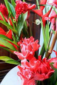 Galangal red flowers. — Stock Photo