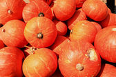 Harvest fresh pumpkin orange in the farm for halloween day — Stock Photo