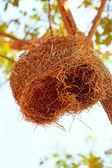 Bird's nest on tree — Stock Photo