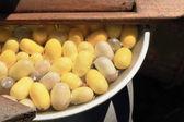 Maken van de zijderups cocoon — Stockfoto