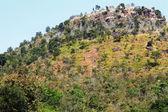 Lente boom op de berg — Stockfoto