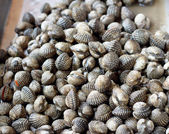 Fresh cockles at the market — Stock Photo